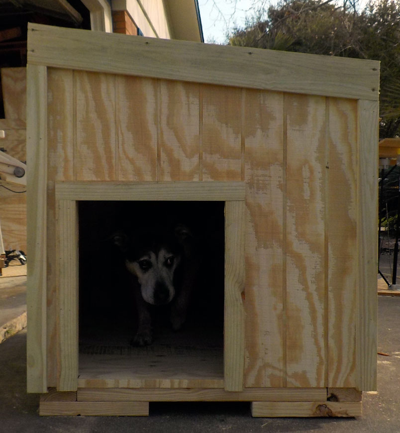 Our dog Fezzik inspects the made to order dog house before it gets delivered for painting.