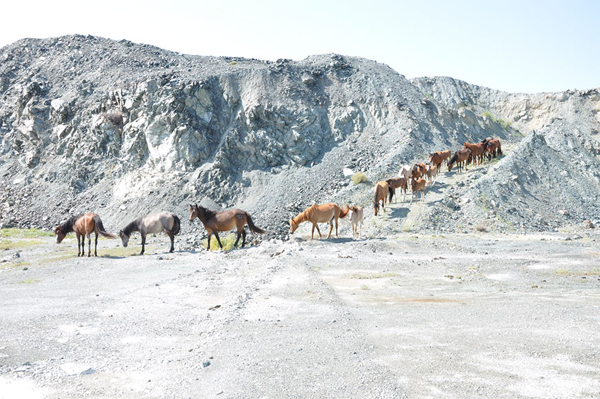 We were met by the wild horses who frequently came to the mine to drink water from the flooded pits.