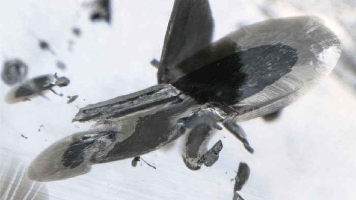A close-up view of a metallic inclusion. The inclusion is reflective/silver in appearance, surrounded by a black, graphite-bearing decompression crack. Image is 2.56 mm wide. (Photomicrograph: Evan Smith; © GIA)
