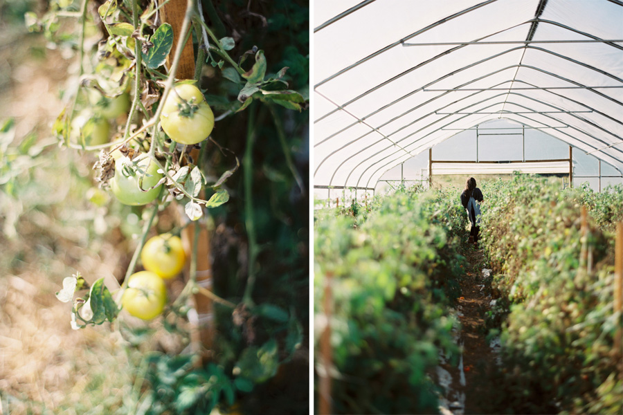 Roy's Farm    Ventura, CA.