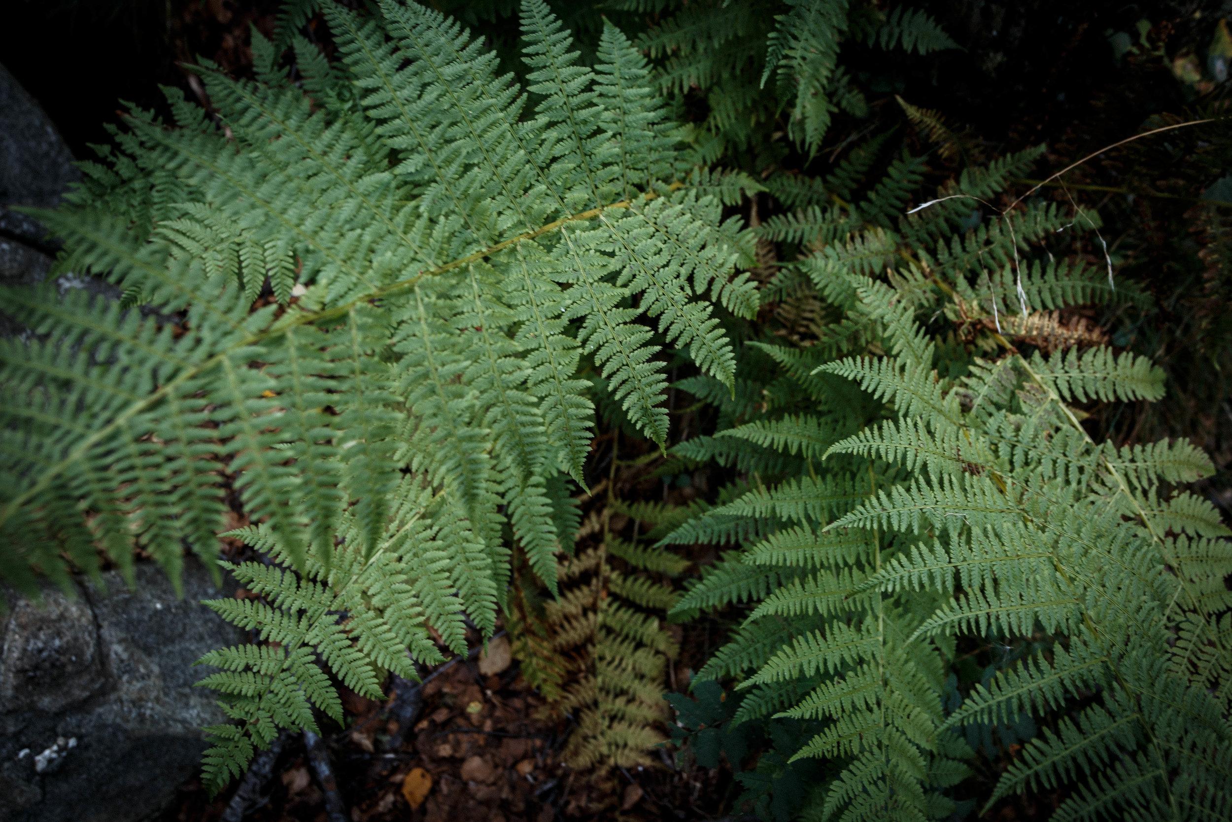 North_forest_3.jpg
