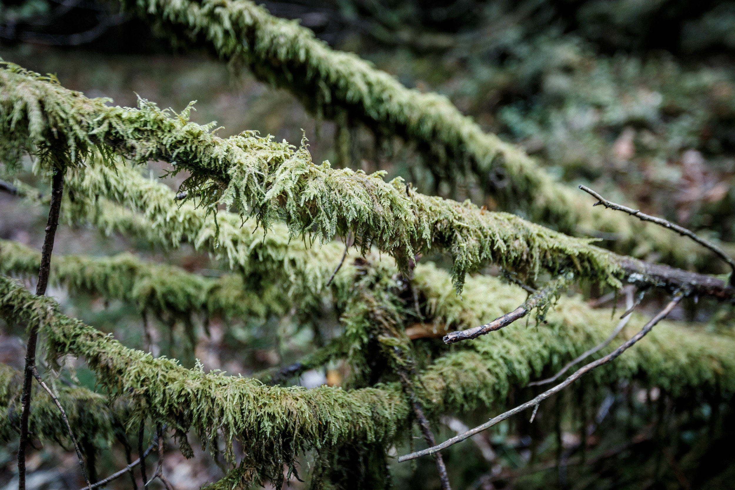 North_forest_10.jpg