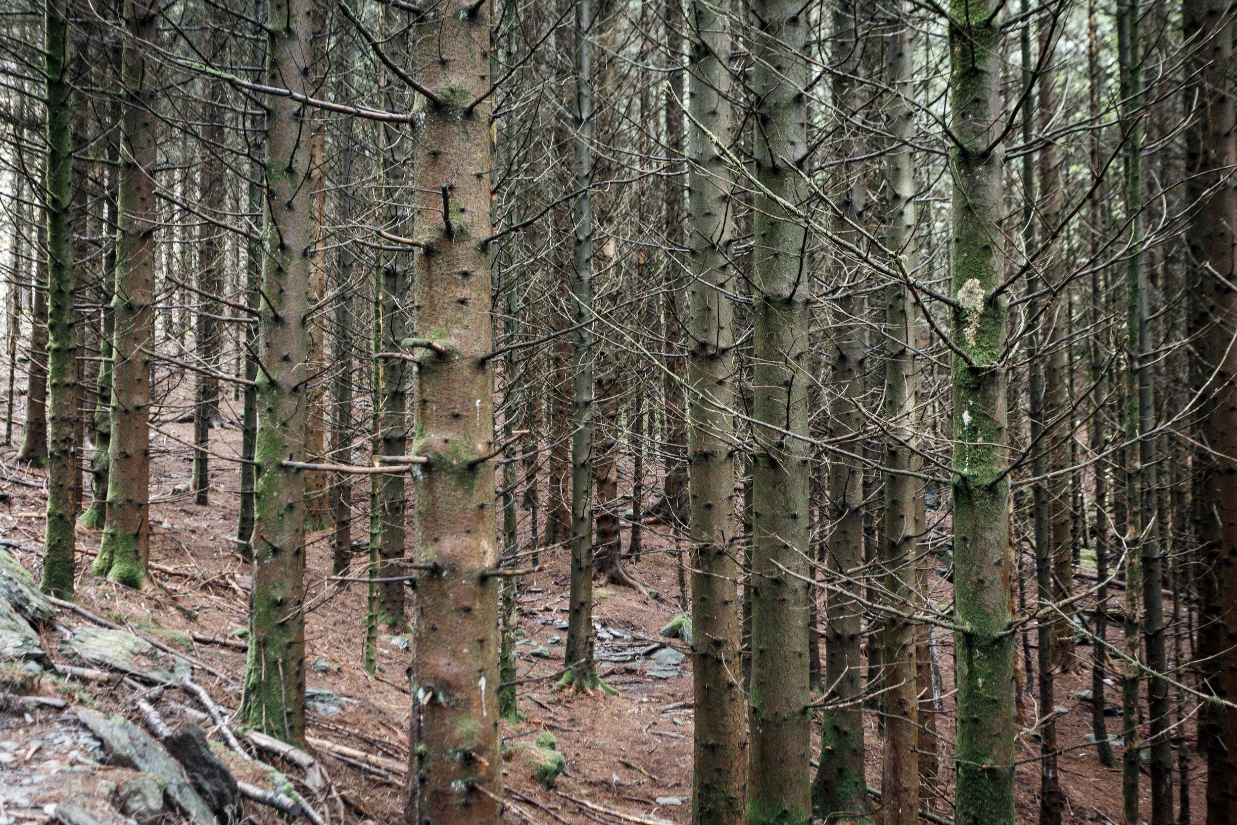 North_forest_11.jpg
