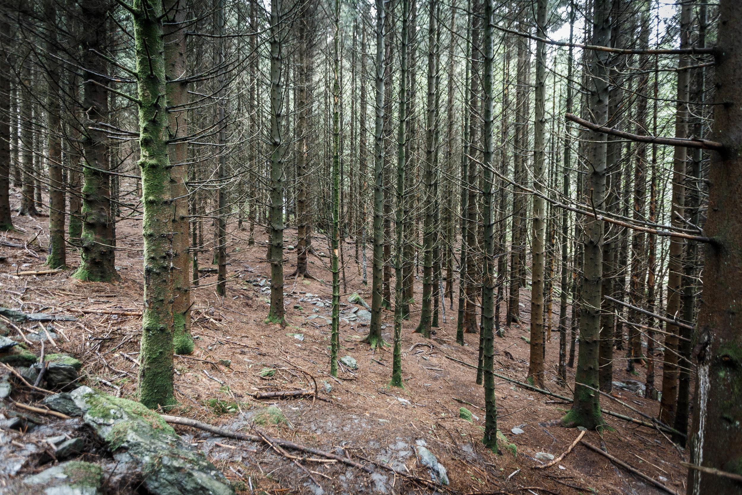 North_forest_12.jpg