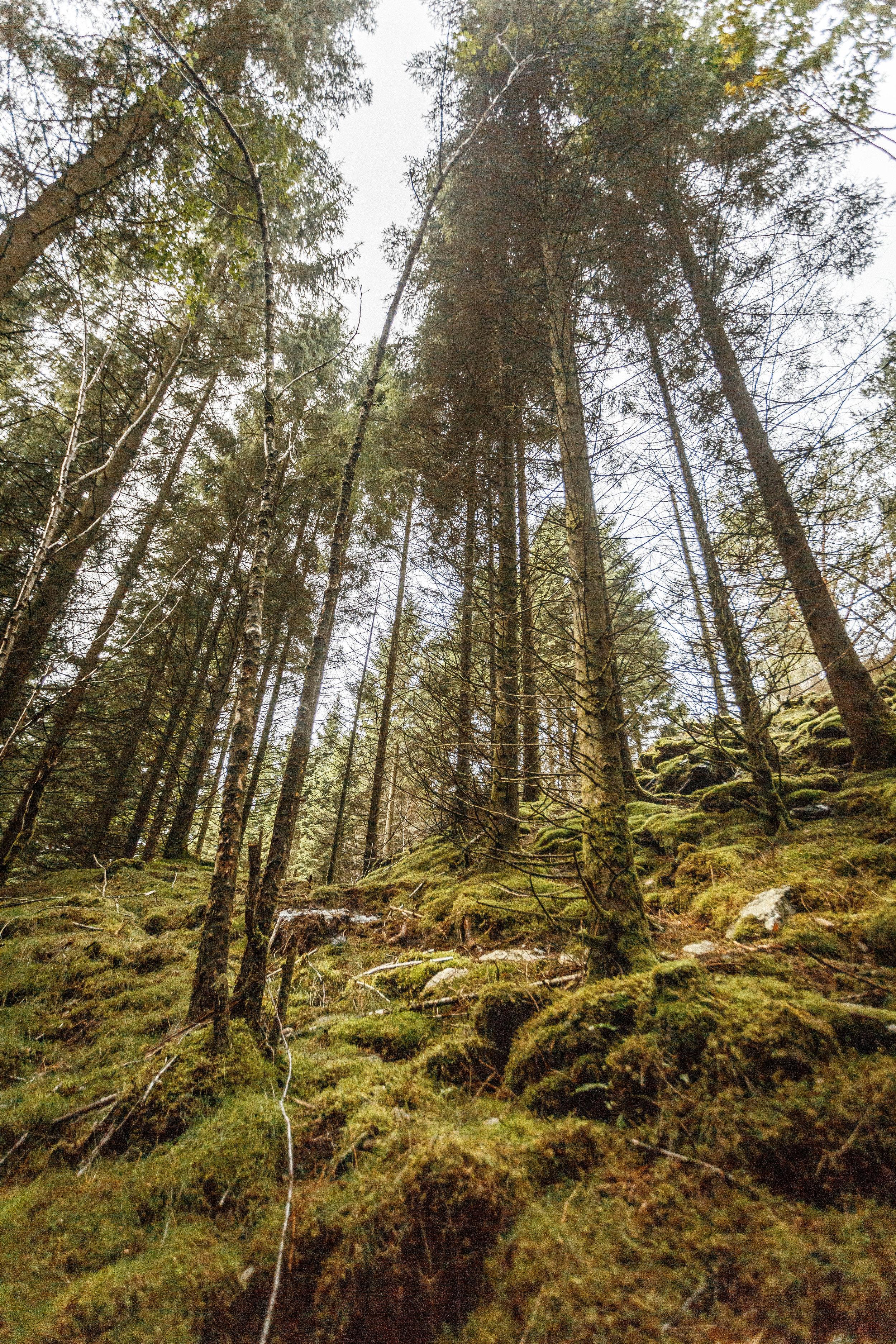 North_forest_13.jpg
