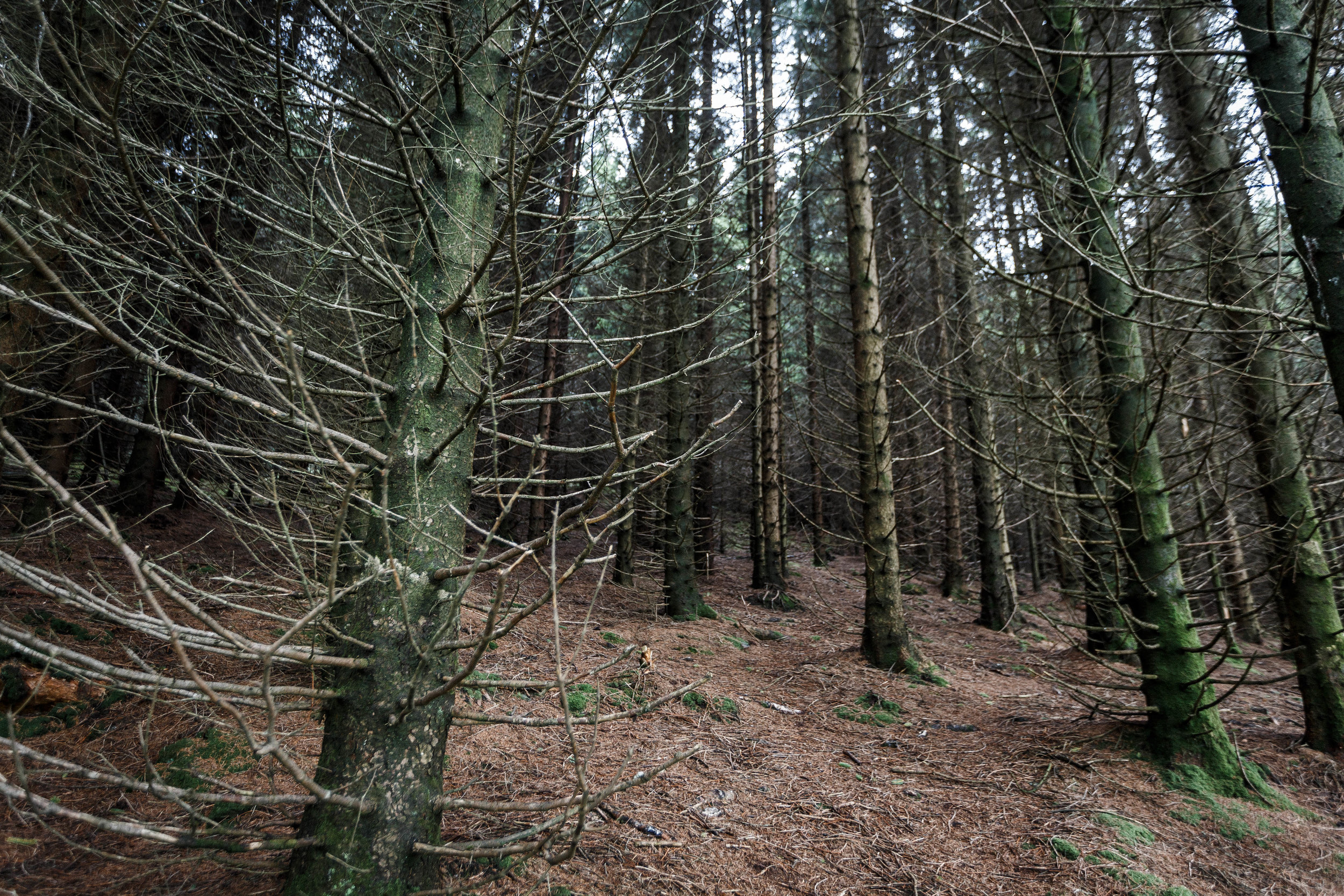 North_forest_18.jpg