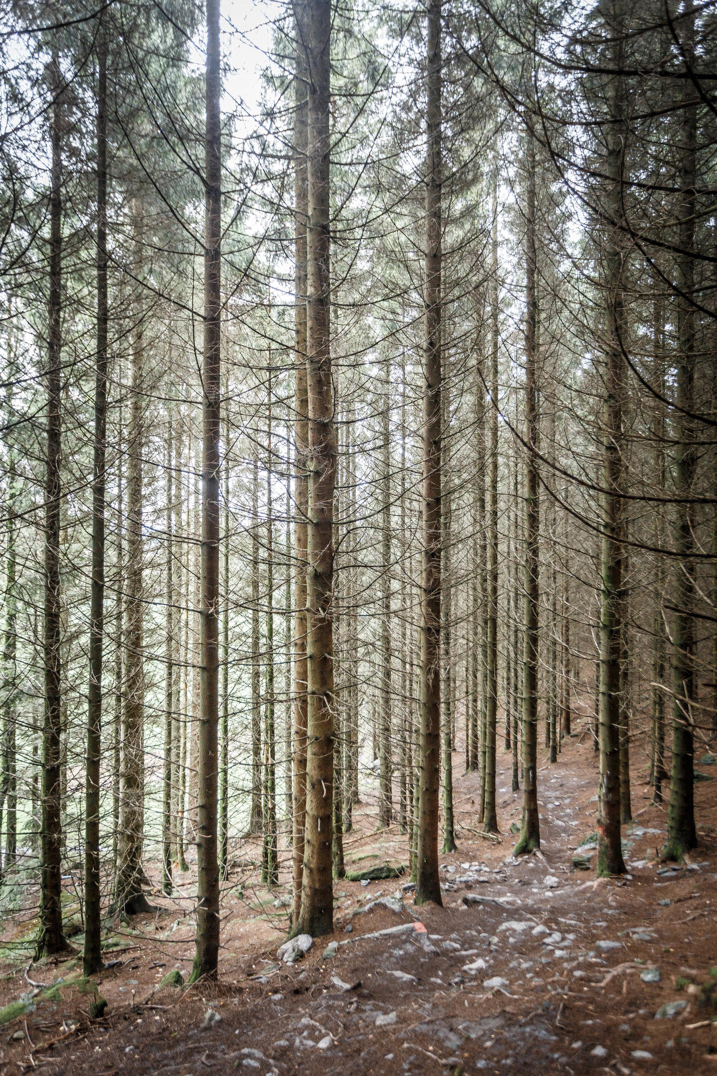 North_forest_19.jpg