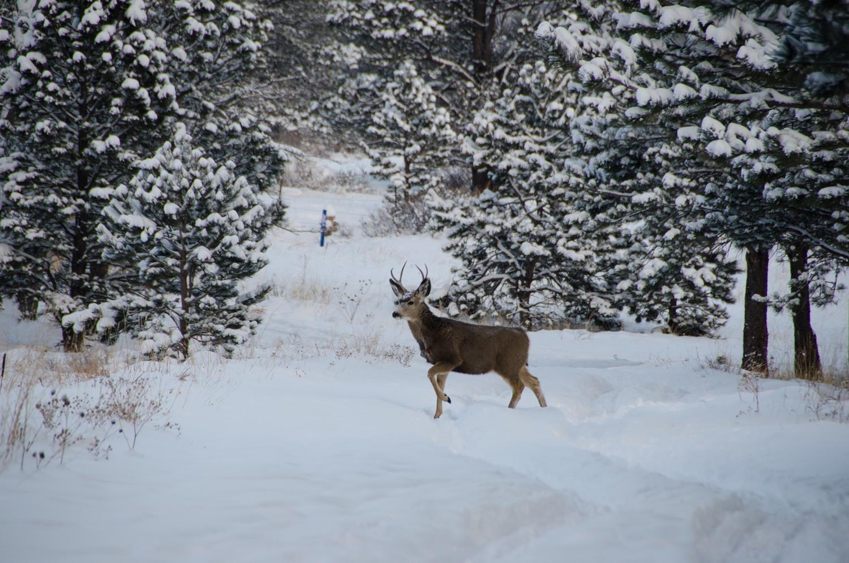 Happy New Deer