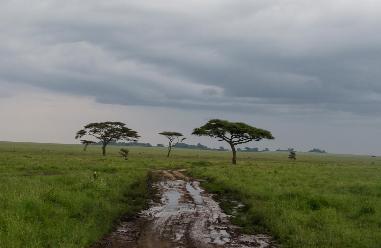The road through the Serengeti (© Kaitlyn Ellison)