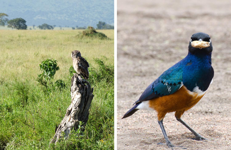 Birds of the Serengeti (© Kaitlyn Ellison)