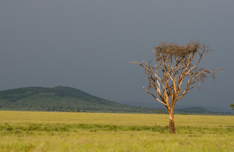 Chartreuse Serengeti (© Kaitlyn Ellison)