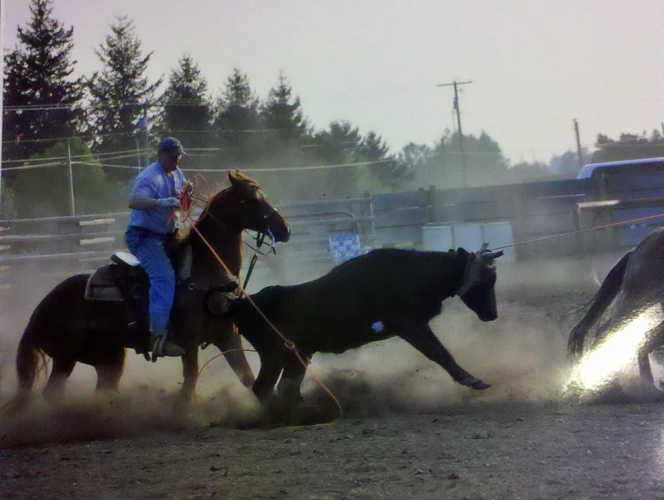 I mostly team rope for fun now. But there was a time I traveled every weekend in the summer and roped in big jackpot ropings and state finals competitions in Washington, Oregon, and Idaho. All of these photos were taken before I started developing cinches and breast collars which is why you don't see them in the photos. I am using all the products I make now in all my activities.