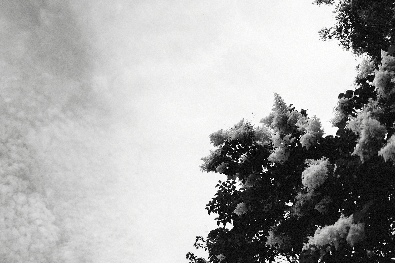 Detail shot of the sky on the wedding day