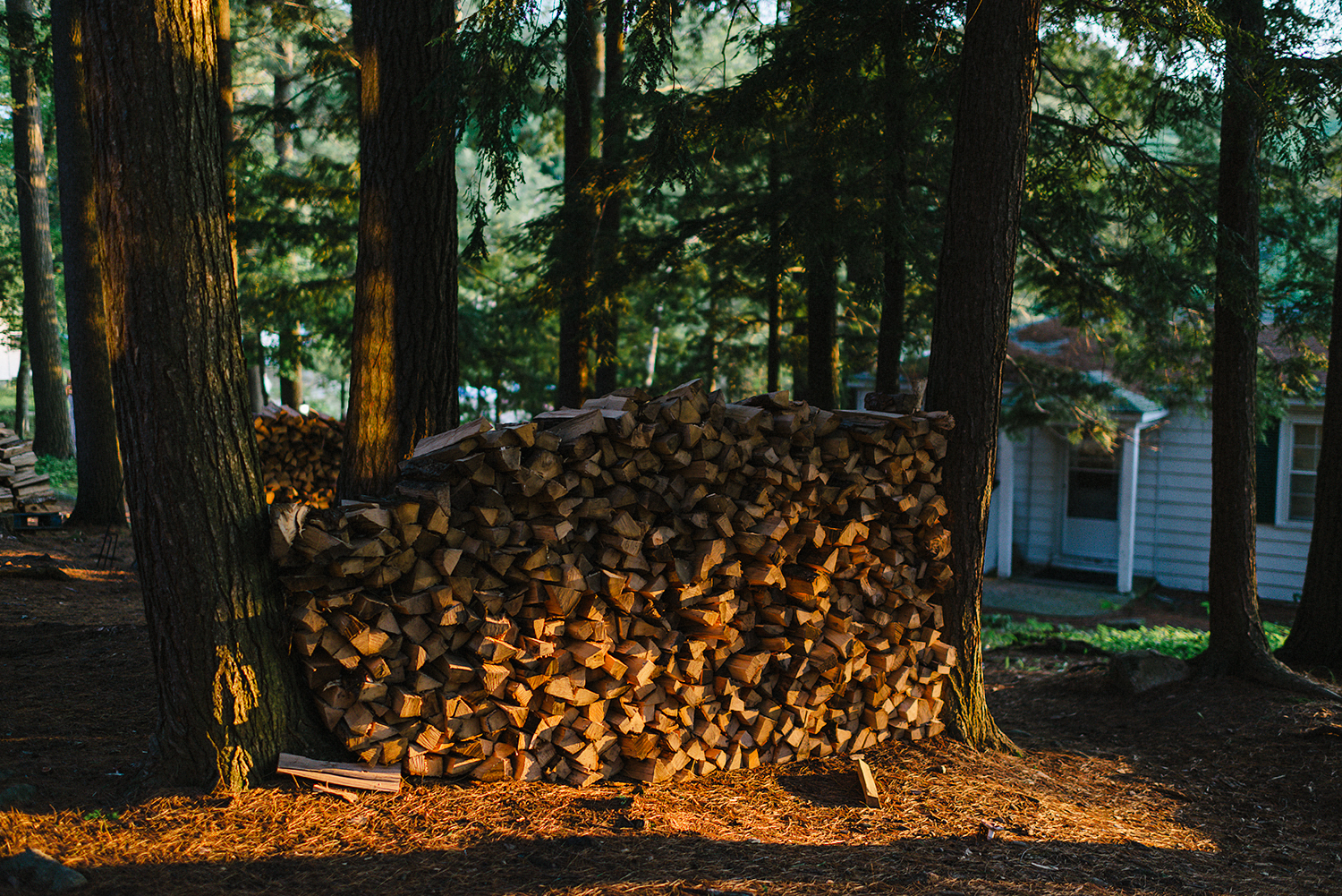 Muskoka-Cottage-Wedding-Photography-Photographer_Photojournalistic-Documentary-Wedding-Photography_Lakeside-Ceremony-Sunset-Light-on--lonely-logs.jpg