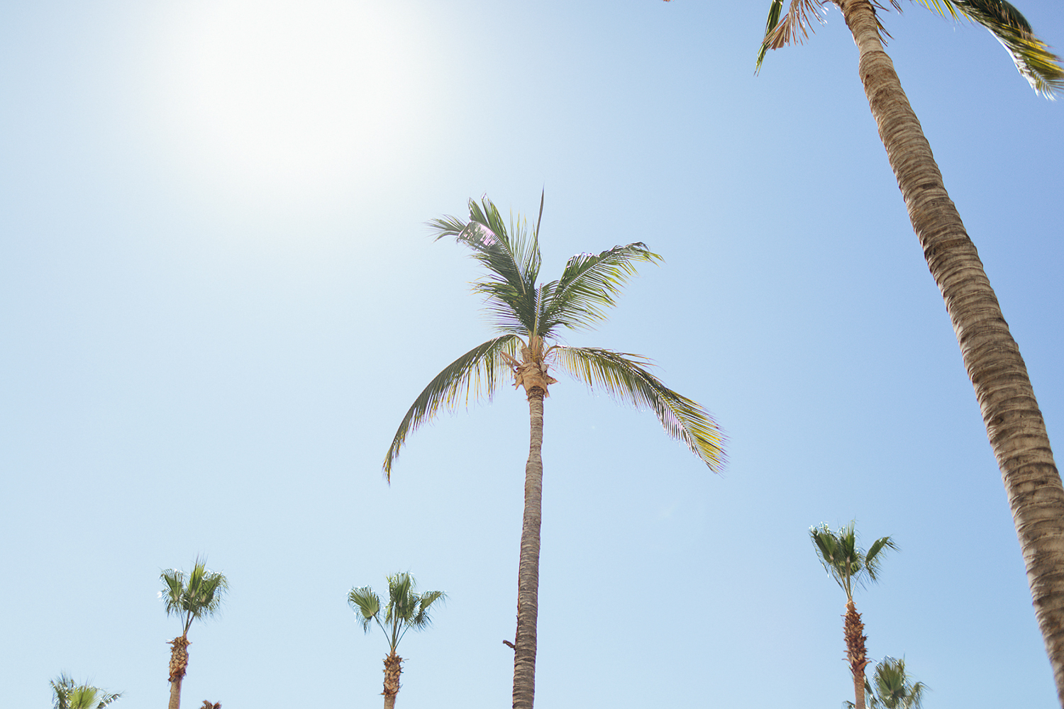 cabo-san-lucas-wedding-travelling-destination-wedding-photographer-based-out-of-toronto-best-wedding-photographers-hipster-trendy-documentary-style-mexico-wedding-details-palm-tress.jpg