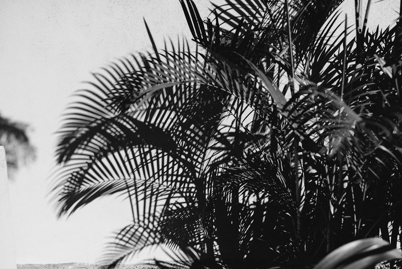 destination-wedding-ventanas-private-residence-alternative-toronto-wedding-photographer-bride-getting-ready-tattooed-bride-hipster-wedding-dress-rue-de-seine-loversland-dress-details-badass-palm-trees-find-the-light-palm-frons-bw.jpg