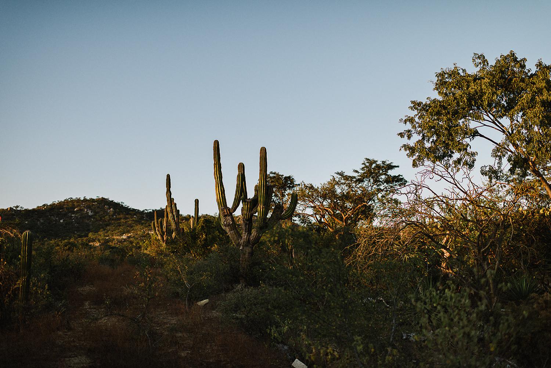 destination-wedding-cabo-san-lucas-ventanas-private-residence-alternative-toronto-wedding-photographer-documentary-photojournalistic-portraits-bride-and-groom-portraits-intimate-real-moments-sunset-desert-epic-cacti-details.jpg