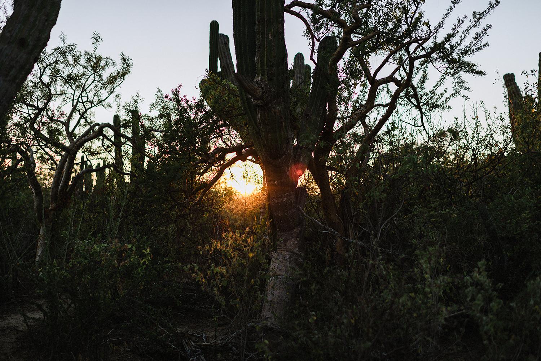 destination-wedding-cabo-san-lucas-ventanas-private-residence-alternative-toronto-wedding-photographer-documentary-photojournalistic-portraits-bride-and-groom-portraits-intimate-real-moments-sunset-desert-epic-cacti-details-sky-setting.jpg