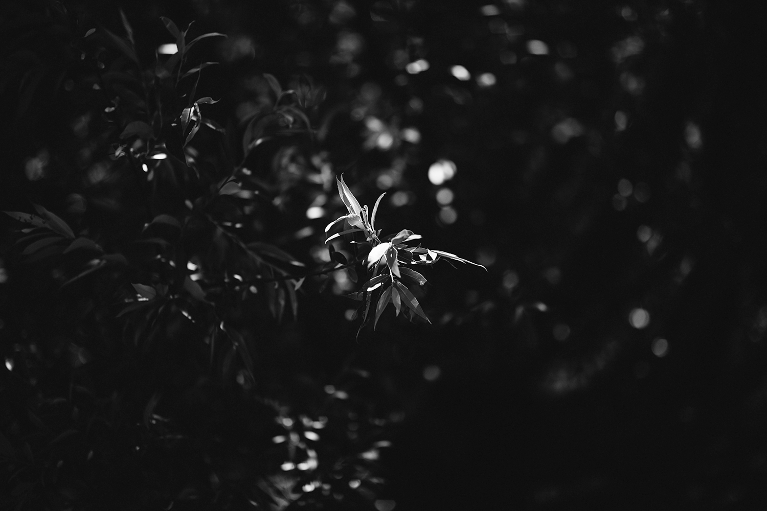 Best-Documentary-photojournalistic-wedding-photographers-Toronto-Ontario-Canada-Rural-Country-House-Backyard-Wedding-Vintage-childhood-home-willow-tree-details-light-bw.jpg
