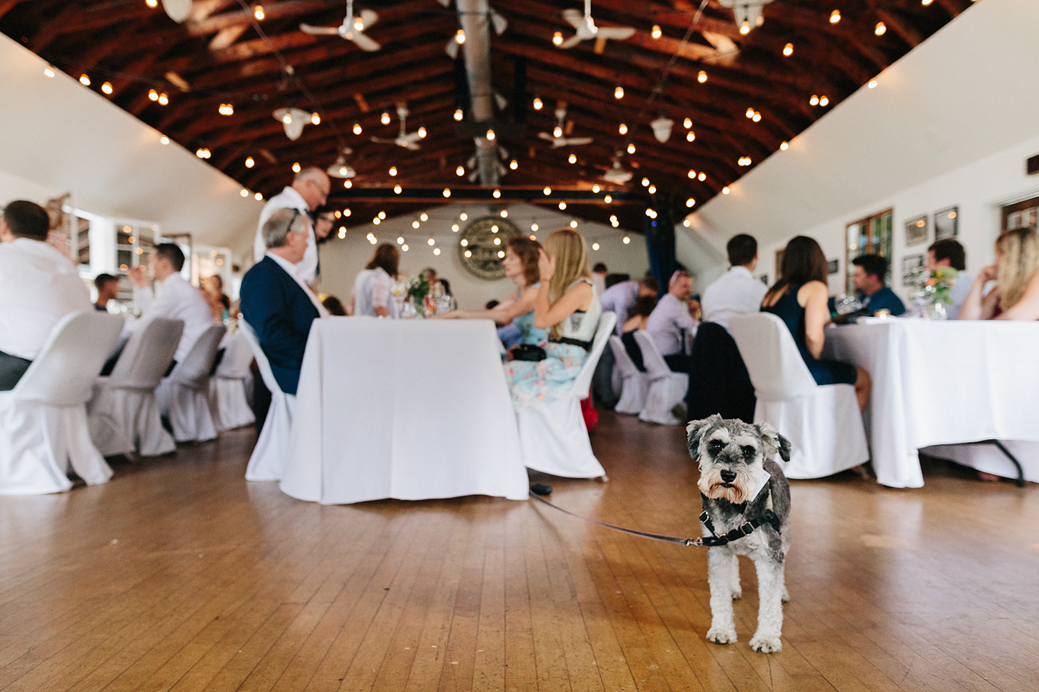 Toronto-Island-Wedding-Toronto-Best-Film-Wedding-Photographers-3b-photography-analog-photography-wards-island-clubhouse-junebug-weddings-vintage-venue-reception-in-old-clubhouse-otto-the-terrier-dog-chilling.jpg