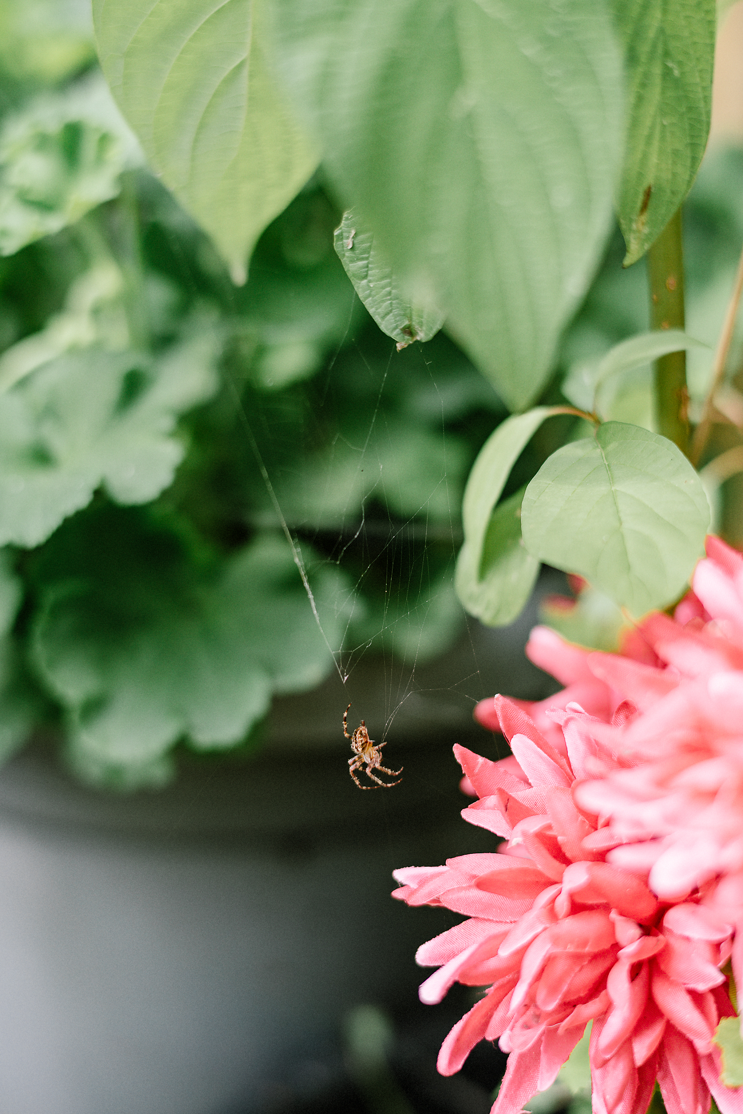Best-Wedding-Photographers-Toronto-with-a-documentary-photojournalistic-approach-and-style-Toronto-Island-Cafe-Clubhouse-Wedding-Photography-Hip-Cool-Bride-and-Groom-Islaand-Clubhouse-Ceremony-Vintage-Spider-Flower-Detail.jpg