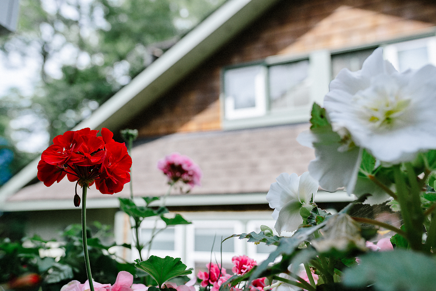 Best-Wedding-Photographers-Toronto-with-a-documentary-photojournalistic-approach-and-style-Toronto-Island-Cafe-Clubhouse-Wedding-Photography-Hip-Cool-Bride-and-Groom-Islaand-Clubhouse-Ceremony-Vintage-Spider-Flower-Red-Palette.jpg