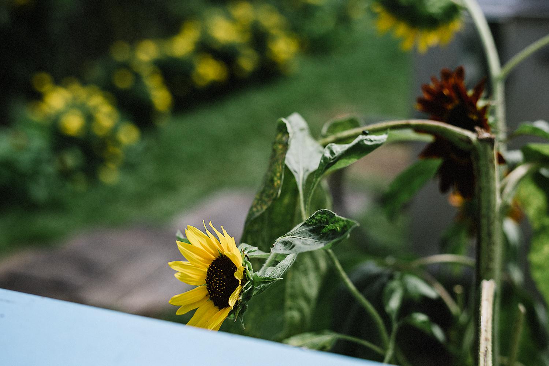 Best-Wedding-Photographers-in-Toronto---Toronto-Island-Cafe-Wedding-Bride-Getting-Ready-in-vintage-country-house-on-Toronto-Island-Boho-Wedding-Bride-and-Groom-sunflower.jpg