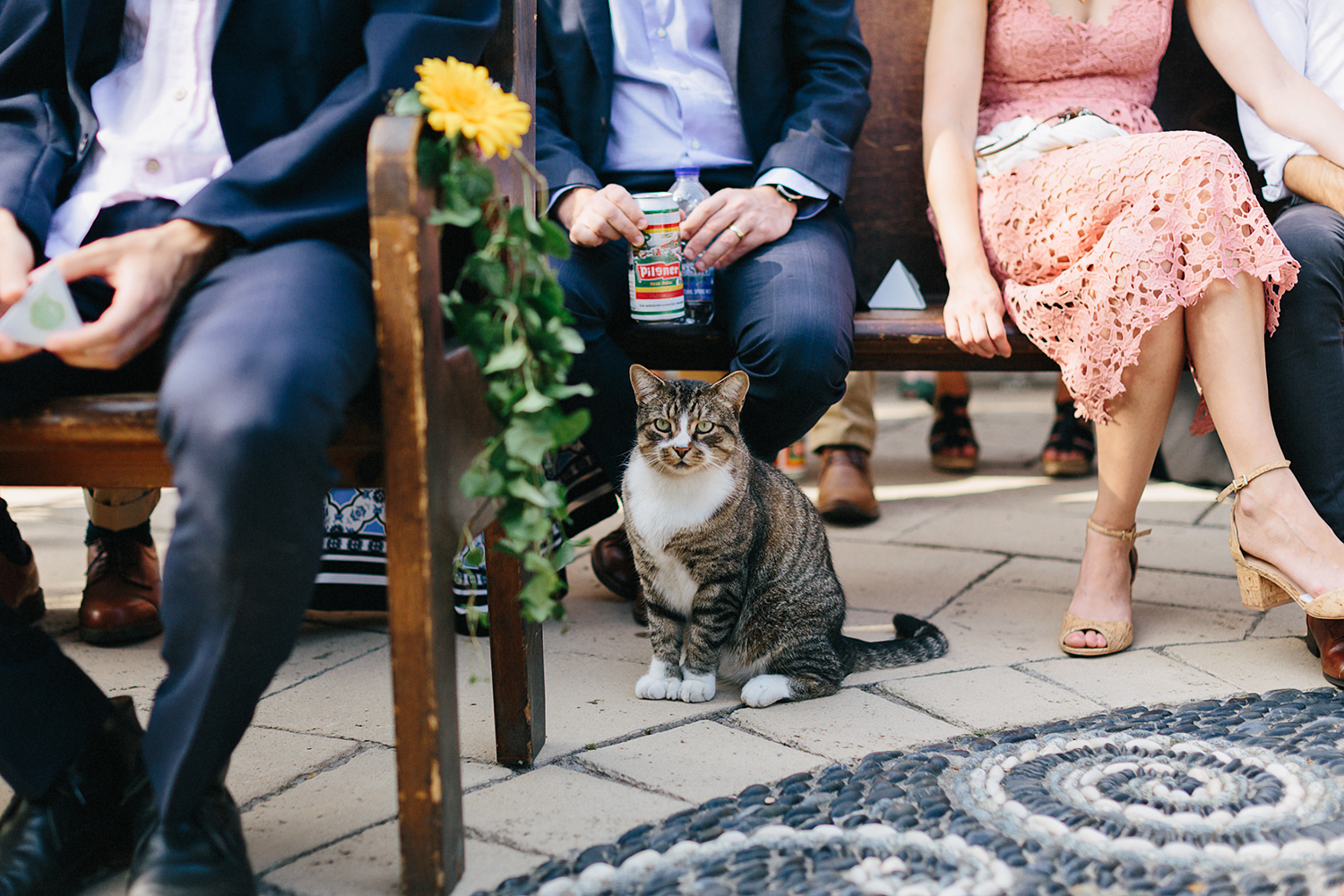 Best-Photographers-in-Toronto-Analog-Film-Toronto-Island-Wedding-Wards-Island-Clubhouse-Venue-small-intimate-hipster-alternative-vintage-inspired-wedding-ceremony-outdoor-cute-little-cat-candid.jpg