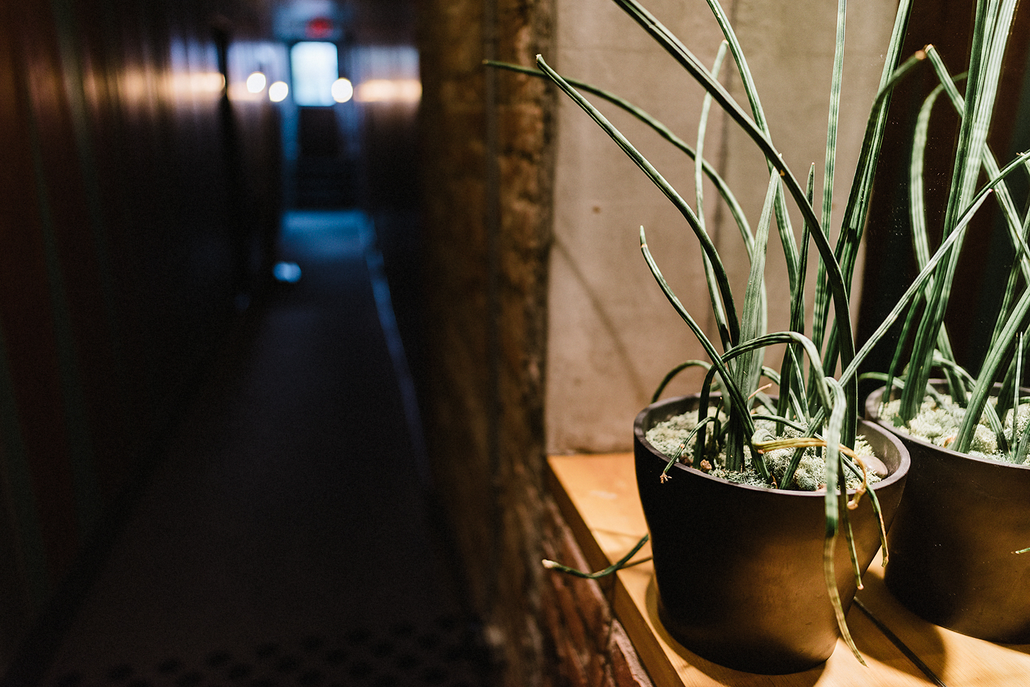 hotel-hallway-plant-details-moody-cinematic-Toronto-Elopement-at-the-Drake-Hotel-Torontos-Best-elopement-photographers-candid-documentary.jpg