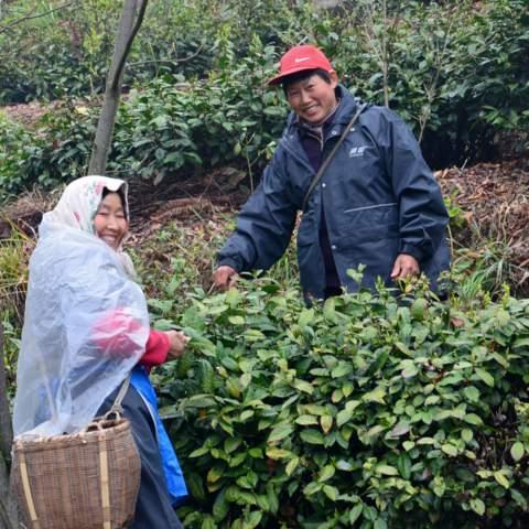 green tea garden impression by cha-shifu (3).JPG