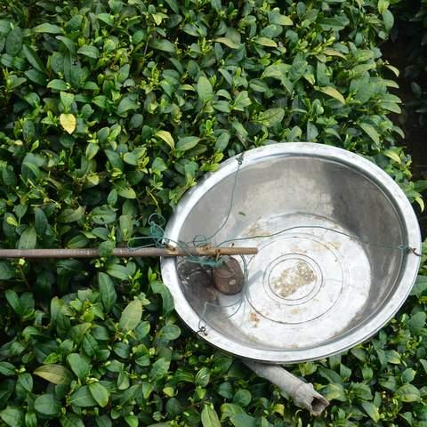 green tea garden impression by cha-shifu (7).JPG