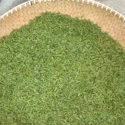 green tea garden impression by cha-shifu (17).JPG