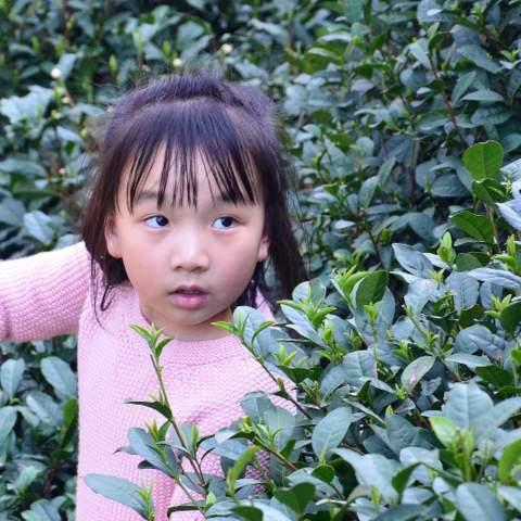 green tea garden impression by cha-shifu (22).JPG