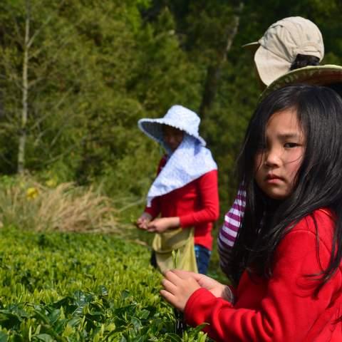 green tea garden impression by cha-shifu (29).JPG