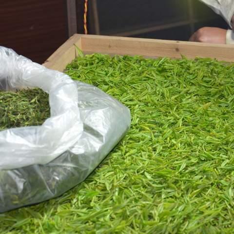 green tea garden impression by cha-shifu (40).JPG