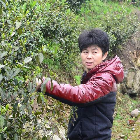 Ms Wang, my earliest tea master, she has the patience to explain taste of green tea and its influences of origin and different cultivar. And we are neighbours since January 2009.