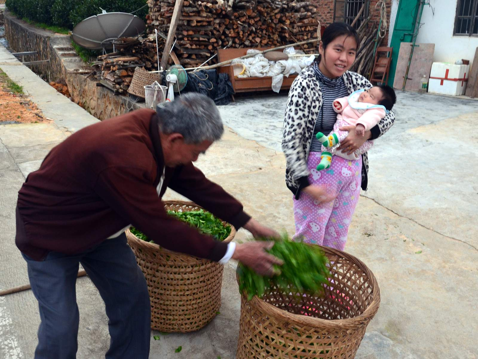 Honey Orchid, Shui Xian Almond, Duck Shit an Chicken case Dancong Oolong ur tea is harvested and processed in a small village between Fenguang town and Wudong Mountain by Cha-Shifu.com (2).JPG