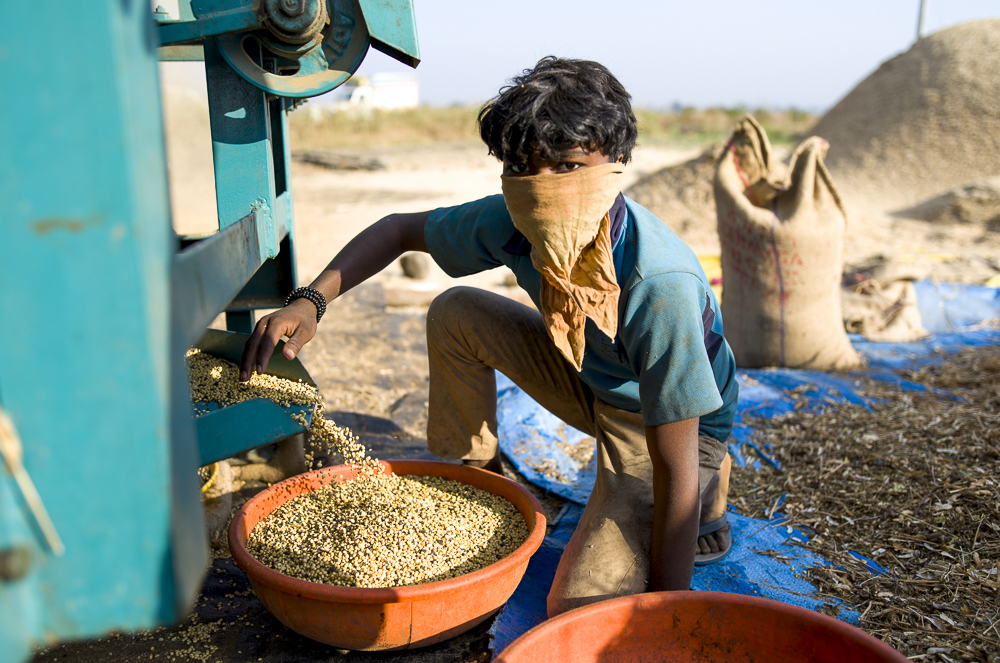 A young worker in a soy bean plantation.