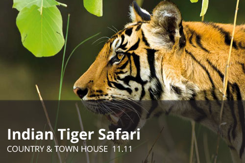 Indian Tiger Safari | Country & Town House