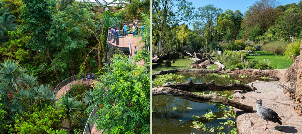 Left: Masoala treetop walkway (opened in 2013). © Zoo Zürich, Corinne Invernizzi   Right: Pantanal enclosure (opened in 2012). © Zoo Zürich, Corinne Invernizzi   Thumb (in published articles index):  Red ruffed lemur Varimena. © Zoo Zürich, Jean-Luc Grossmann