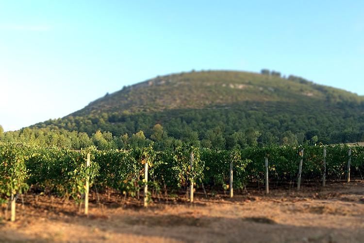 Casa Sardinia_Vineyards.jpg