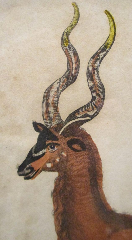 Antelope I.png