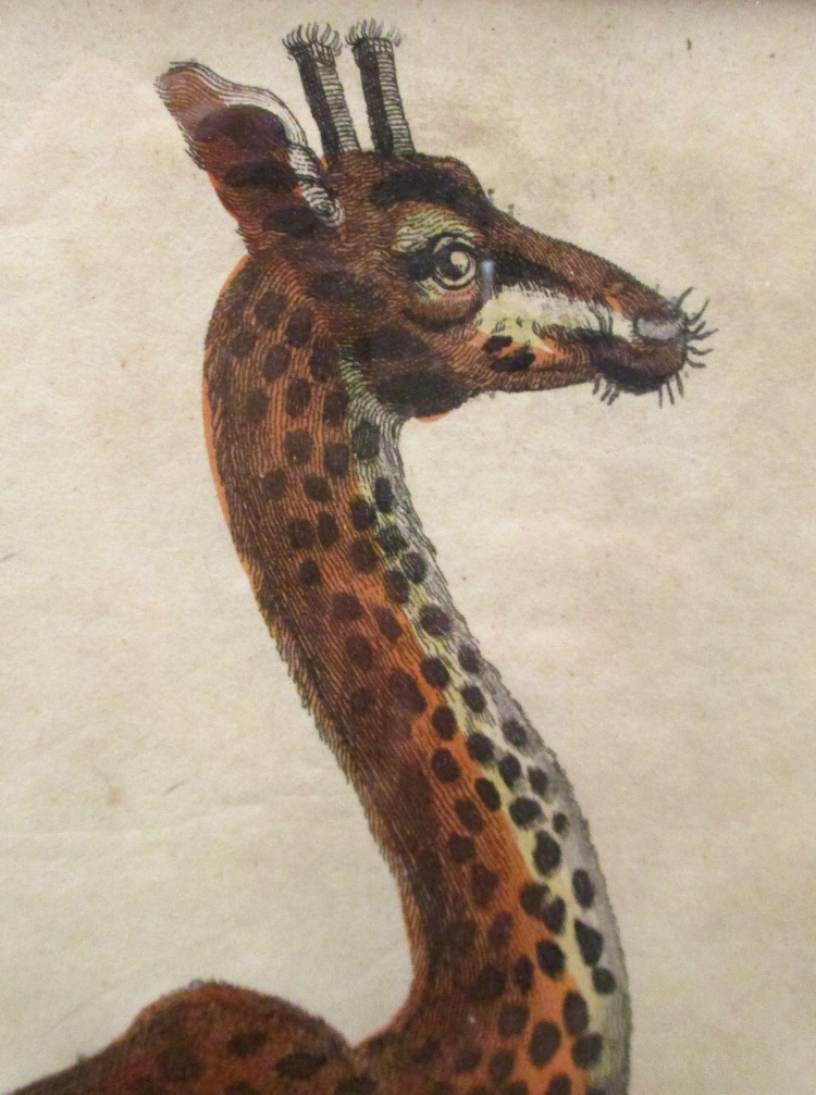 Giraffe I.png