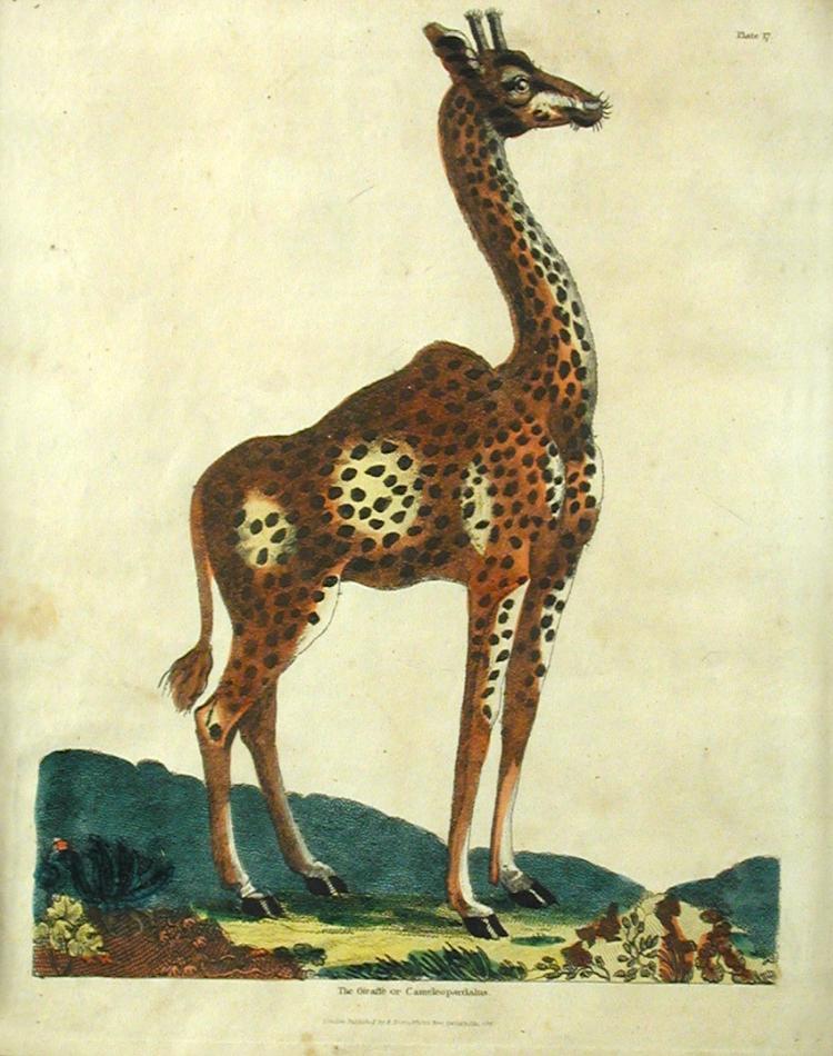 Giraffe II.png