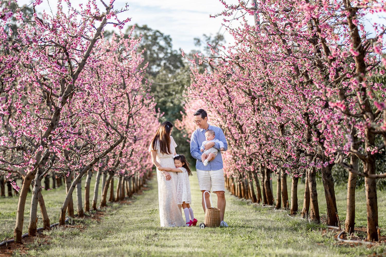 Family-Photographer-Blossoms.jpg