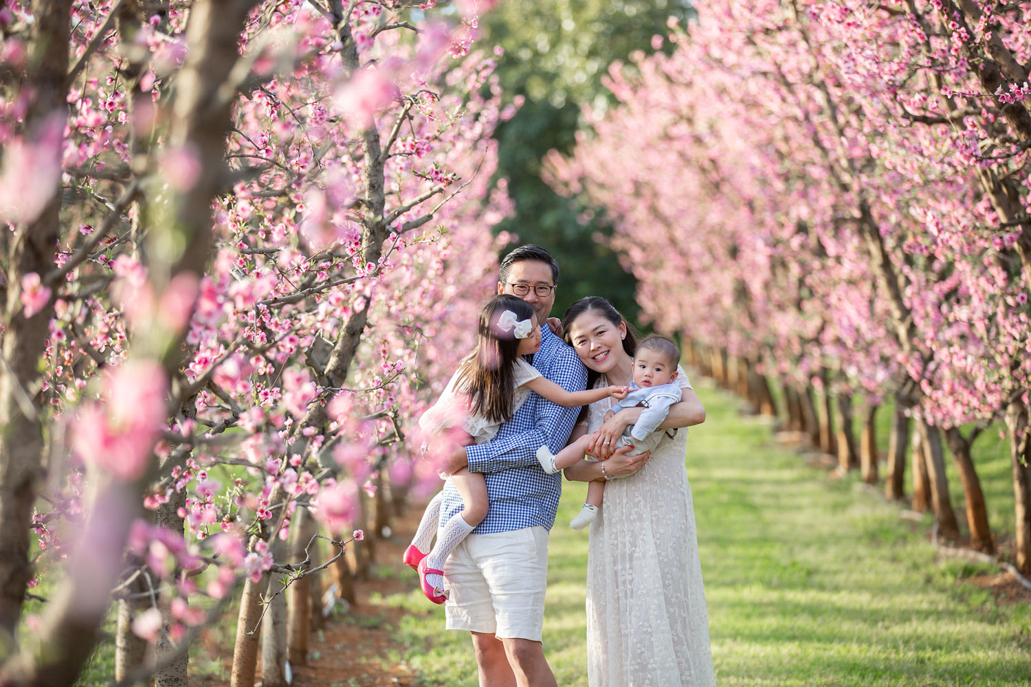 Spring-Blossoms-in-Perth.jpg