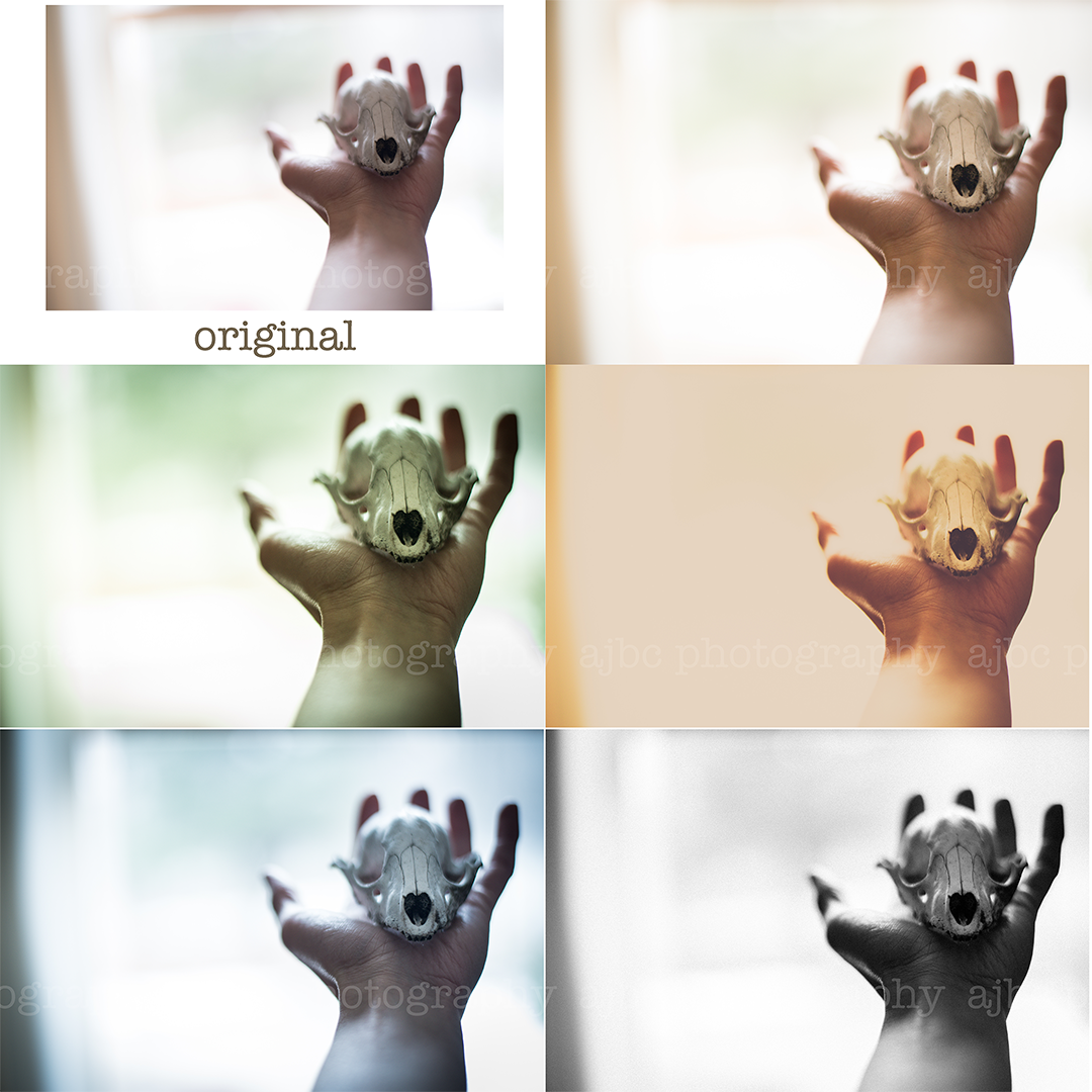 creative photography edit port huron MI