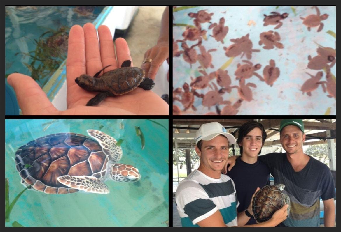 tortugas-cuadradas.jpg