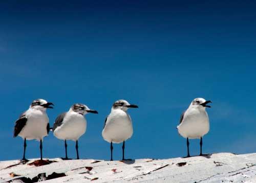 Bird-watching-losroques-1.jpg