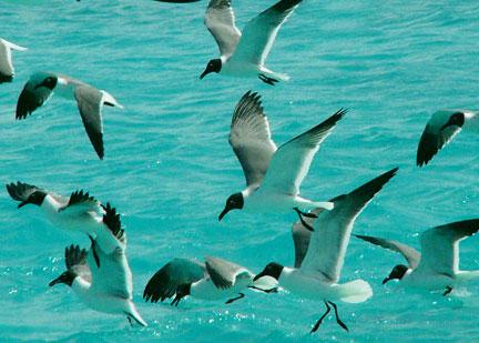 los-roques-Bird-watching.jpg